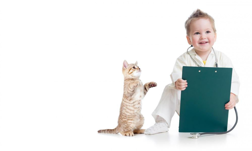 Kitten care in Henderson, NV