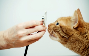 Las Vegas Animal Hospital offering Cat Surgery and Cat Vaccinations